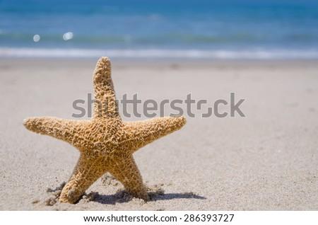 Starfish on the sandy beach (close up) - stock photo