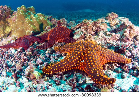 Starfish on the Seabed - stock photo