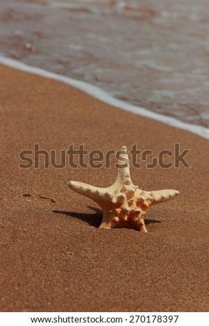starfish on the shore of a sandy beach; Kerch; Crimea; Russia - stock photo