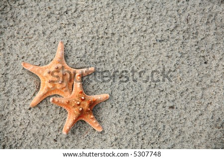 Starfish Pair: Two starfish on a sandy beach. Vacation concept with room for text. - stock photo