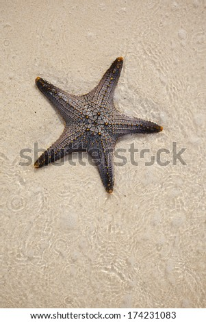 starfish (sea star) - stock photo