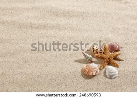 Starfish & Shells on Beach Sand - stock photo
