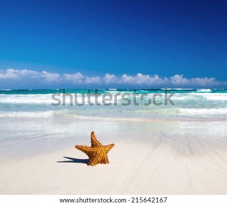 starfish with ocean - stock photo