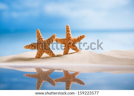 starfish  with ocean , beach, seascape and reflection, shallow dof - stock photo