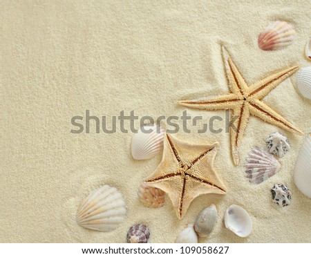 Starfish with shells on the Beach - stock photo