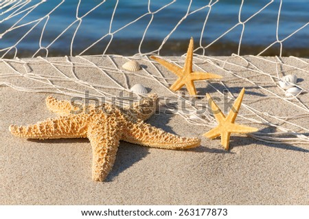Starfishes and seashells in fishing net on sandy beach, stranded goods at summer beach - stock photo