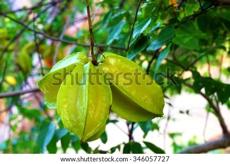 how to grow star fruit