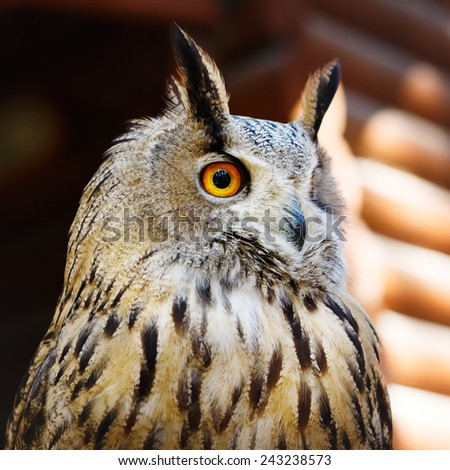 Staring owl sitting against wooden wall - stock photo