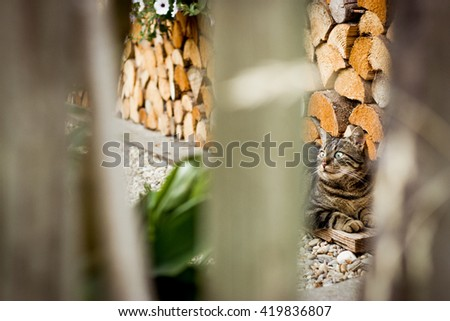 Staring tabby cat in the garden behind the fence - stock photo
