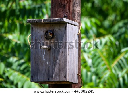 starling nestling in a birdhouse - stock photo