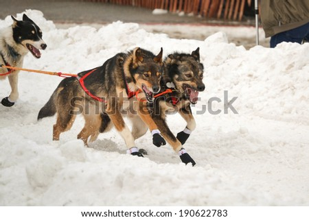 an overview of the dogsled race iditarod Like any competition, the iditarod trail sled dog race has its risks but in the  alaskan wilderness, where racers are going strong for at least eight days straight, .