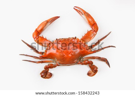 Steamed Blue Crab on white background, one of the symbols of Maryland State and Ocean City, MD  - stock photo