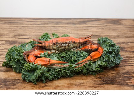 Steamed Blue Crab, one of the symbols of Maryland State and Ocean City, MD garnished with kale on a wooden table - stock photo