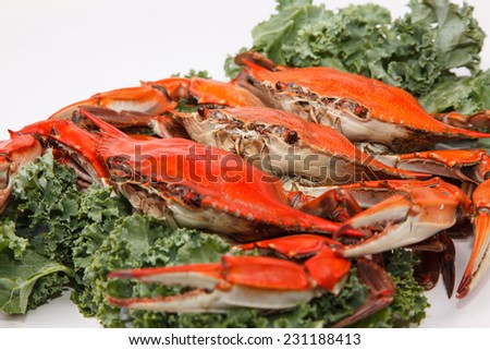 Steamed Blue Crabs garnished with kale on white background  - stock photo
