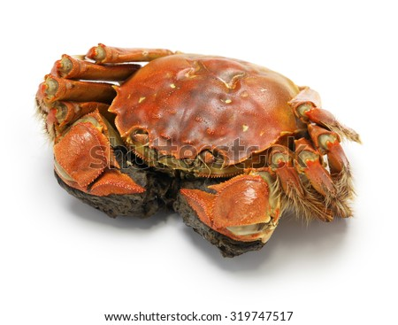 steamed chinese mitten crab, shanghai hairy crab    - stock photo