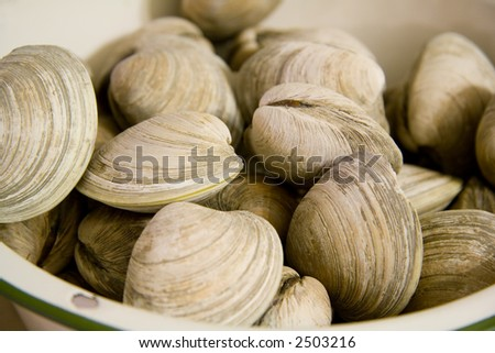 Steamed Clams in a Bowl Ready to Eat - stock photo