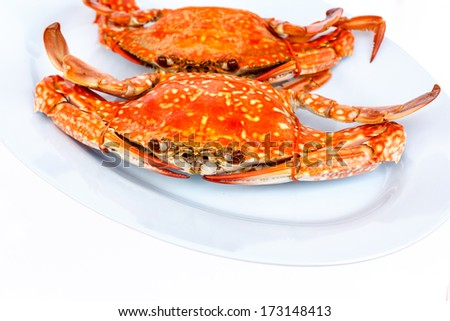 Steamed crabs on a white background - stock photo