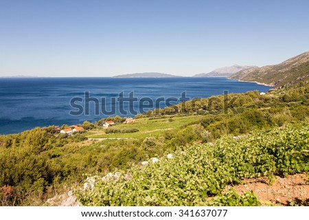 steep sea coast covered with green vineyard and the view to blue sea - stock photo