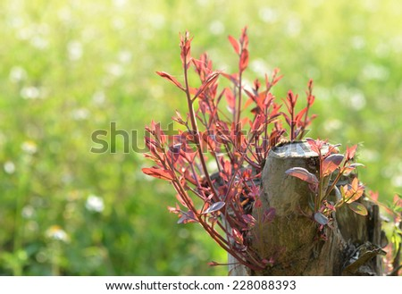 Stem the growth of the seedlings - stock photo