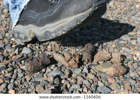 Stepping in Dog Poo - stock photo