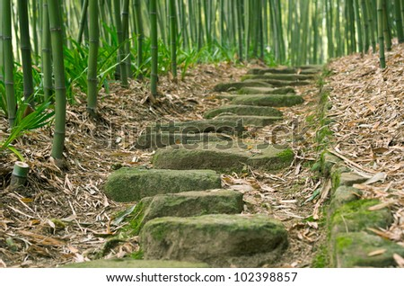 Stepping Stones in Bamboo Forest - stock photo