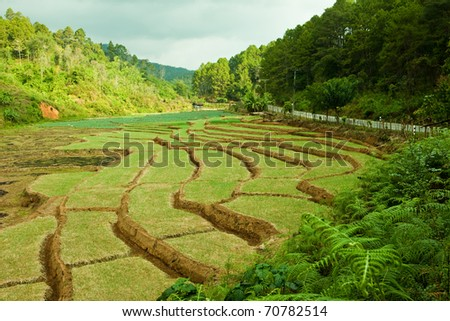 Steps rice field in northern part of Thailand. - stock photo