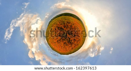 Stereographic panoramic projection of a fern field with blue sky and clouds. 360 degree panorama. Planet Panorama. - stock photo