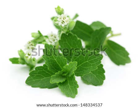 Stevia � A substitute of sugar with flower - stock photo