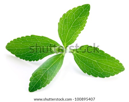Stevia rebaudiana, sweetleaf sugar substitute isolated on white background - stock photo