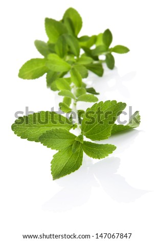 Stevia sugar leaf isolated on white background with copy space. Culinary healthy eating. Sugar supplement without risk. - stock photo