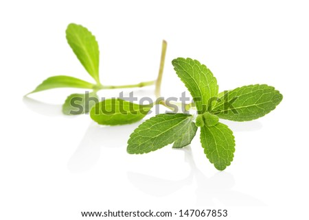 Stevia sugarleaf isolated on white background. Healthy sugar alternative. Culinary herbs. - stock photo