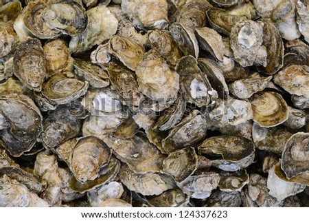 Stewed clams - stock photo