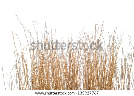 Sticks branches isolated on white - stock photo