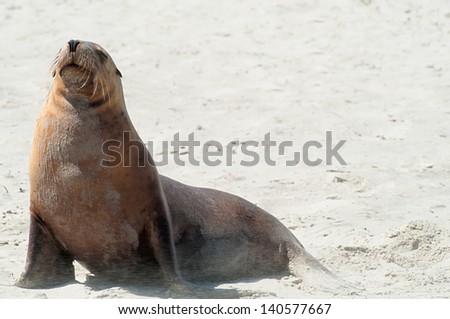stiff seal breeze - stock photo