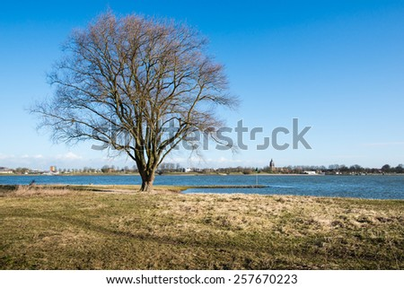Still leafless tree on the bank of a wide Dutch river is basking in the light of the first spring sunshine. - stock photo