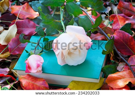 Still life: a beautiful pale pink rose and a book on the ground in the garden among the fallen autumn leaves. - stock photo