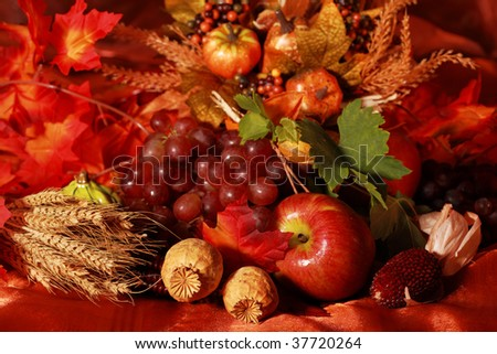 Still life and harvest or table decoration for Thanksgiving - stock photo