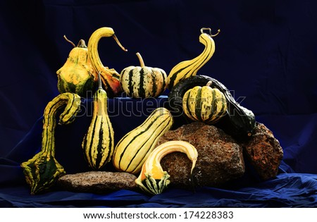 Still life art photography on raw fancy pumpkins - stock photo