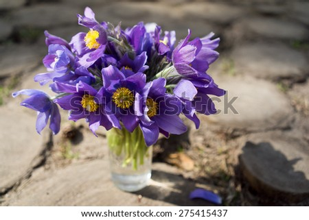 still life bouquet with first spring blue snowdrop flowers - stock photo