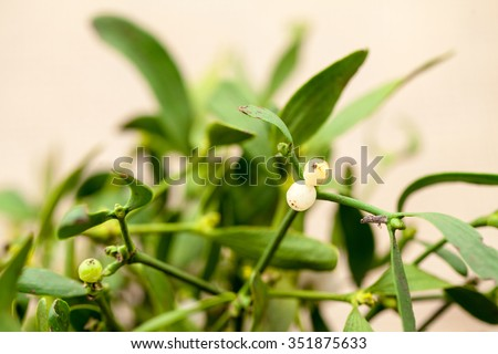 Still life composition with mistletoe. Christmas theme - stock photo
