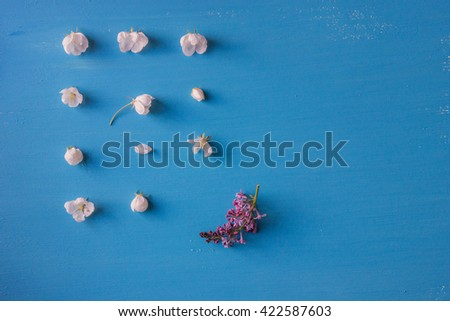 Still life congratulation card with white apple flowers and a bird cherry flower on a blue background. Card has a broken symmetrical rhythm and a place for text box. - stock photo