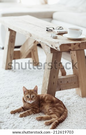 Still life details, cup of coffee on rustic bench and a cat lying down near it on white carpet - stock photo