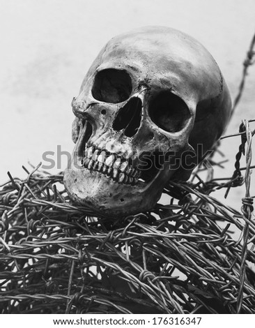 Still life fine art photography on human skeleton criminal concept with barbed wire black and white version with film grain. - stock photo
