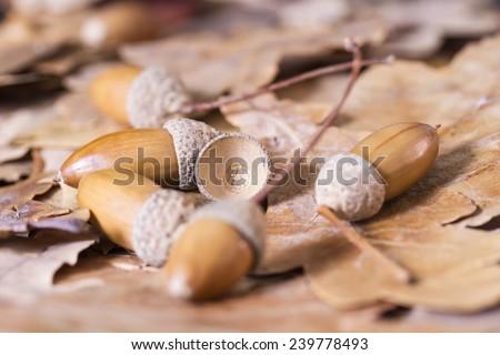 Still life of autumn leaves of oak, maple and acorns - stock photo