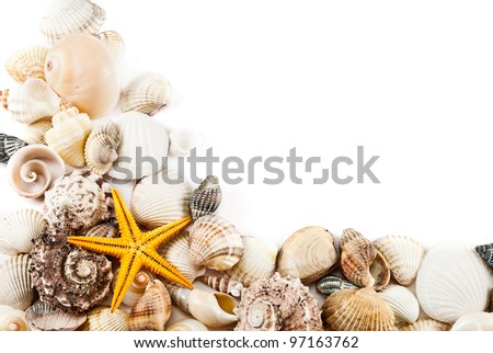 Still life of little seashells on a white background. - stock photo