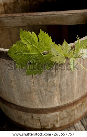 Still life of old wine barrel with wine leaves growing along the edge, weathered and rustic feel - stock photo