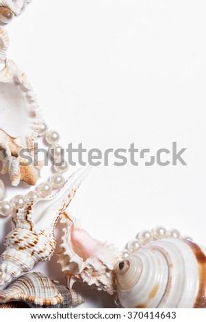 Still life  seashells on a white background. Beautiful background, frame - stock photo