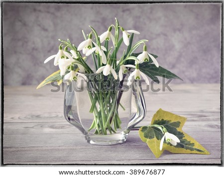 Still life. Still life with snowdrops. Still life and flower. Still life on wood. Still life - flower in vase. Still life on wooden background. Snowdrops still life. - stock photo