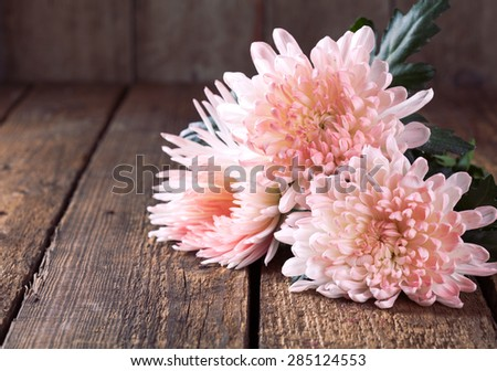 Still life: white pink chrysanthemum on a wooden table. Rustic style, toned - stock photo