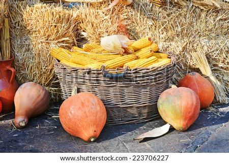 Still life with a basket of corn and pumpkin - stock photo